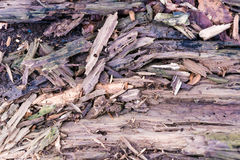 krakingowa nawierzchniowa tekstura wietrzejący drewno Fotografia Stock