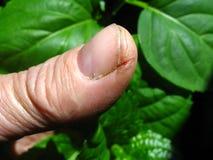 krakingowa skóra Zdjęcie Stock
