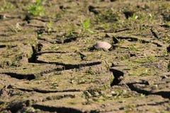 Krakingowa sucha szarości ziemia z trawą blisko rzeki obrazy stock