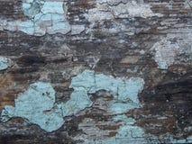 Krakingowa tekstura farba Stara farba na drewnianym nawierzchniowym zakończeniu Widok wierzchołek, Makro- fotografia barwił tekst Fotografia Royalty Free