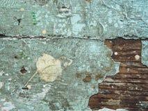Krakingowa tekstura farba Stara farba na drewnianym nawierzchniowym zakończeniu Widok wierzchołek, Makro- fotografia barwił tekst Obraz Stock