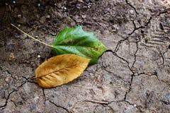 Krakingowa ziemia z spadać liśćmi Obrazy Stock