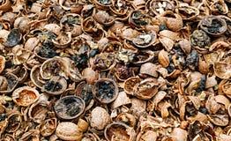 krakingowe orzechy Fotografia Stock