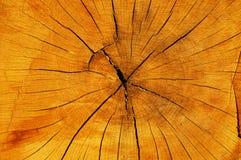 krakingowej rżniętej starej tekstury drzewny bagażnik Obraz Royalty Free