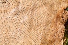 Krakingowy Dębowy bela przekrój poprzeczny Zdjęcie Stock
