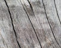 Krakingowy drewniany tło w ciepłej kolor palecie Wietrzeję solił drzewnego bagażnika makro- fotografię Zdjęcie Stock