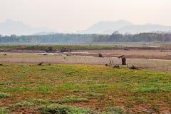 Krakingowy suchy ląd bez wody abstrakcyjny tło obraz royalty free