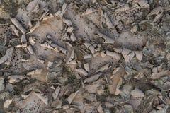 Krakingowy suchy ląd bez wody Zdjęcie Stock