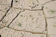 Krakingowy suszy ziemię z osamotnioną trawą w jaskrawym świetle Obrazy Royalty Free