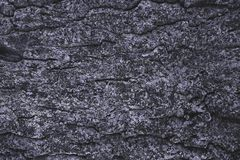 krakingowy szorstki purpurowy drzewnej barkentyny tło fotografia royalty free