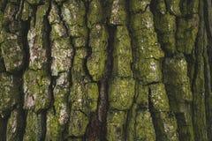 krakingowy szorstki zielony drzewnej barkentyny tło zdjęcia stock