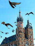 Krakow pigeons Royalty Free Stock Photos
