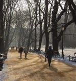 krakow planty poland Royaltyfri Bild