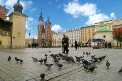Central square of Krakow with pigeons stock image