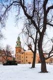 krakow poland Wawel slott och gammalt träd royaltyfri foto