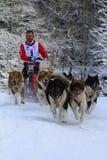 Sled dog race Royalty Free Stock Photo