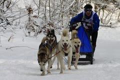 Sled dog race Royalty Free Stock Image
