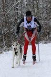 Musher skiing behind dog Royalty Free Stock Photo