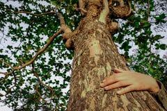 Krama ett stort träd och att symbolisera anslutningen mellan människor och naturen royaltyfria foton