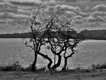 Kramar naturen Fotografering för Bildbyråer