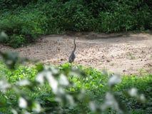 Kran im Flussbett Stockbilder
