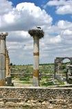 Kran in seinem Nest oben auf römische Ruinen Stockbild