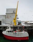 Kran som lastar av fisken från skytteln, Norge Royaltyfria Foton