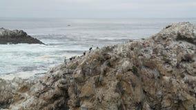 Kranar i Kalifornien Fotografering för Bildbyråer
