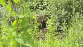 Kranbalken schoss von einem Teich in einem Garten stock video