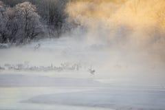 Kranen in de Mist: Crane Running door Water royalty-vrije stock afbeeldingen