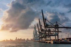 Kranen van de haven van Miami en horizon van Miami van de binnenstad bij zon stock afbeelding