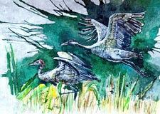 Kranen wildlife Het schilderen van natte waterverf op papier Naïef art Tekeningswaterverf op papier royalty-vrije illustratie