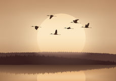 Kranflyg på solnedgången Royaltyfria Bilder