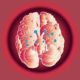 Kranie- nerver royaltyfri illustrationer