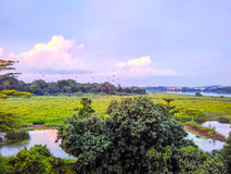 Kranji marshes Royalty Free Stock Photo