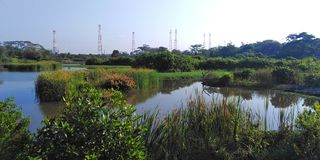 Kranji marshes, Singapore. Kranji marshes, a designated nature reserve near Kranji reservoir in northwest Singapore  asia park natural landscape protected area royalty free stock photography