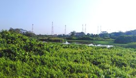 Kranji marshes, Singapore. Kranji marshes, a designated nature reserve near Kranji reservoir in northwest Singapore  asia park natural landscape protected area stock photo