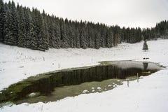 Kranjska dolina. On Pokljuka in winter Stock Image