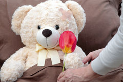Kranke geduldige empfangende Tulpenblume Stockfotos