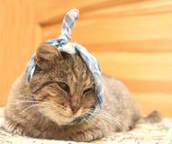 Kranke Katze Lizenzfreies Stockbild