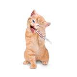 Kranke Katze mit dem Eisbeutel und Thermometer lokalisiert Lizenzfreies Stockfoto