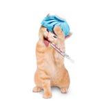 Kranke Katze mit Eisbeutel und Thermometer Lizenzfreies Stockbild