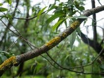 Kranke Niederlassung des Baums Lizenzfreie Stockbilder