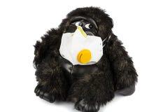 Kranke tragende Grippemaske des weichen Spielzeuggorillas lizenzfreie stockfotos
