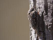 Kranker Vogel auf Baum Stockfotos