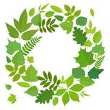Krans av gröna sidor