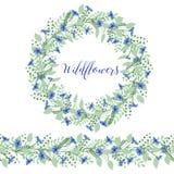 Kransen av blåklinter blommar på en vit bakgrund Dekorbeståndsdel Arkivfoto