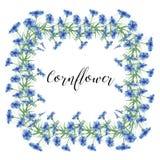 Kransen av blåklinter blommar på en vit bakgrund Dekorbeståndsdel Arkivbild