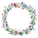 Kransgränsramen med sommarörter, äng blommar Royaltyfria Bilder