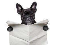 Krantenbuldog royalty-vrije stock foto
